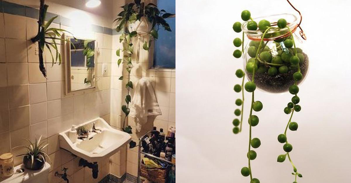 Quelle plante dans un bureau sans fenêtre ?